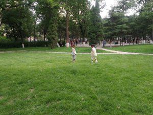 20180701,草地上的童趣